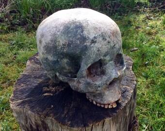 Etruscan Homo Sapiens Skull Replica Sculpture