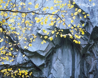 Leaves and slate, Lake District, England