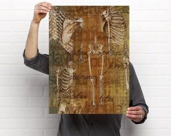 Davinci Drawings Bones Medical Chiropractic Anatomy Artwork