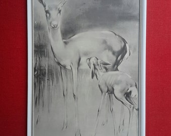 Mid century deer, deer baby room deer, print deer, collectible print, deer with young, 60s prints, wall decoration deer, children's room, Christmas gift