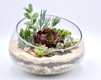 Large Succulent Terrarium Kit, Open glass vase succulent terrarium, Miniature garden, DIY terrarium kit, , Succulent garden, Fairy garden
