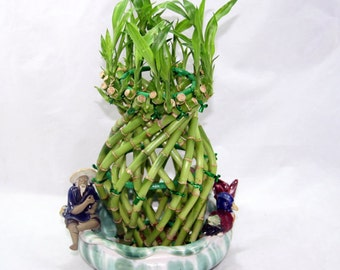 Pineapple Braided Live Lucky Bamboo Plant//Live Bamboo Plant/Living Bamboo Plant