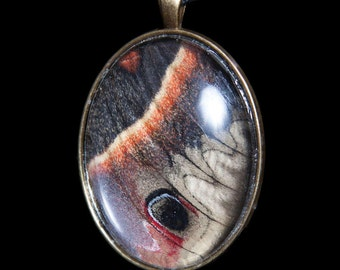 Real Cecropia Moth Wing Pendant