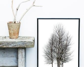 Minimalist Poster, Tree Print, Scandinavian Art, Tree Photo, Black And White Art, Giclee print, Wall Art,  Poster, Wall Decor