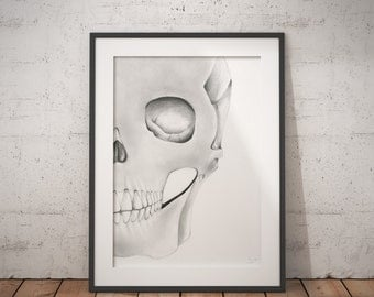 Skull Drawing, Art, Wall Art, Sketch