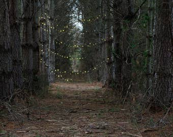 Forest Path Lights Digital Background