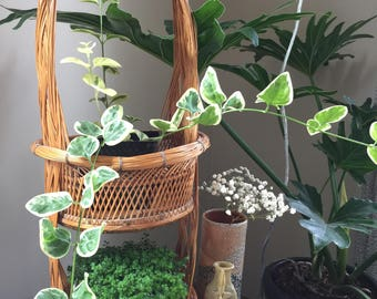 Woven Basket Plant Stand / Hanger
