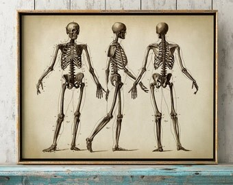ANATOMY PRINT, anatomy poster, human skeleton print, human skeleton poster, bones, medical print, anatomical drawing, human anatomy,