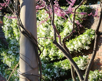 Garden column,winding vines,floral,pink,white,spring,wall art,home decor,