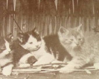 SALE Vintage RPPC of Cats In A Basket
