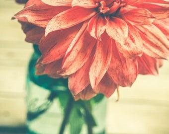 Dahlia Photograph - Rustic Modern Wall Art - Floral Art Print - Orange - Muted Shades - Flower Photography - Farmhouse Wall Art - Autumn