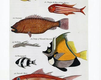 Fish Illustration Art Book Page Print, Rustic Country Cottage Decor, Collectible Fish Art, Ready to Frame