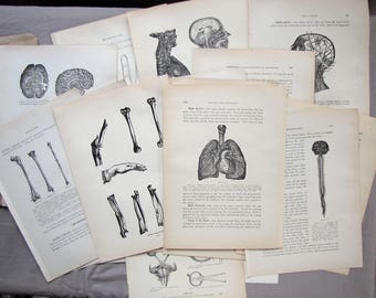 antique medical book pages - anatomy graphics for digital downloads, collage and any kind of Halloween gothic fun