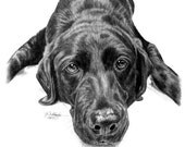 Custom Two Subject Pet Portrait Sketch Special Size & Pricing Option on Hand Drawn Sketch of Your Pet