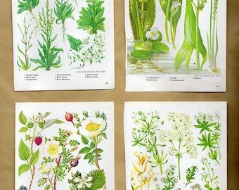 Vintage WALL ART SET of 4 Green Botanical Plant prints