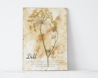 Pressed Herbs- Dills in Frame (2)