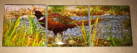 Magnet Set Pheasant  5.25 in x 1.75 in