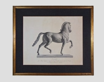 Cavallo / Horse Engraving after Antonio Canova Framed Large Equestrian