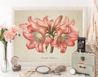 Flower Botanical Print, Amaryllis Belladonna Print, Amaryllis Botanical Print, Amaryllis Botanical Art, Vintage Botanical Reproduction FL096