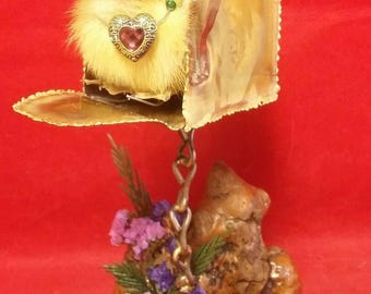 Princess Taxidermy Duck Duckling Long Island Domestic Mailbox Delivery Display-Easter-spring-decor