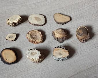 Natural Deer Antler, Organic Earthy Beads, Eco Friendly Beads, Antler Shed, Elk Antler Slices, Forest Supplies, Natural Finds, Antler Slices