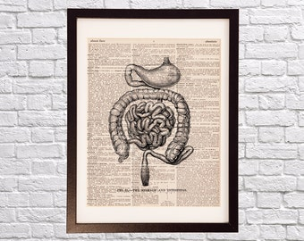 Vintage Intestines Dictionary Print - Anatomy Art - Print on Dictionary Paper - Gastroenterologist Doctor Gift - Medical School - Stomach