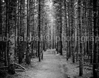Forest Photo Fine Art Photography Bonaventure Island Trees Forest Black and White Quebec Gaspésie Mystical Photo Original Art Home Decor