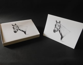 Equine Illustrated Note Cards