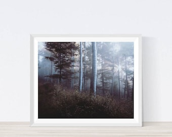 Forest photography,Printable Forest, Forest Digial Print, Forest Wall Art, Trees, Forest Landscape, Forest Prints, Forest Art, Tree Wall Art