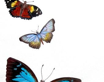Greeting Card - Australian Butterflies
