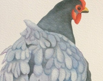 Florence the blue orpington chicken painting