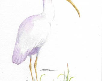 Original Watercolor 11 x 8 inch bird nature wildlife The Thoughtful Ibis wall art decor white portrait