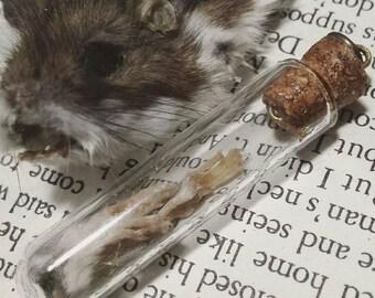 Mummified Mouse Paw Pendant