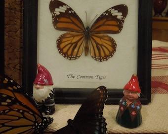 Set of 5 butterflies
