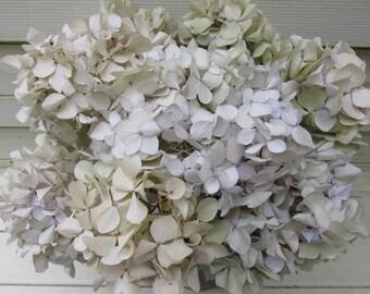 Dried Hydrangea Flowers Antique Cream 8 Stems, Bouquet, Wedding, Rustic Home Decor, Craft, Natural Primitive Farmhouse Floral
