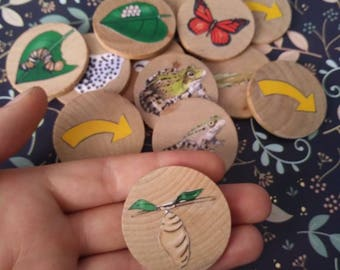 Life Cycle, Animal cycle, Montessori, butterfly, frog, cycle, science, kindergarten