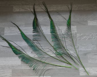 Set of 5 Green dyed Peacock swords feathers