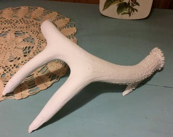 Naturally Shed Whitetail Deer Antler Painted White, Four Point