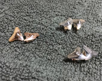Fossil Shark Tooth Stud Earrings