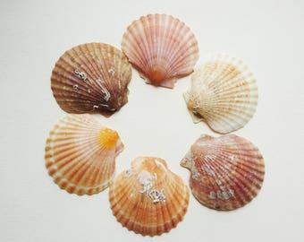 Set of 6 pink Lot 3 scallop shells