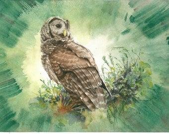Owl (a7), Original painting