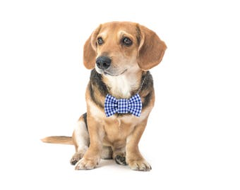 """Blue checked dog bow tie - 30% of sales donated to dog shelters """"dog bow tie"""" symbol for animal support"""