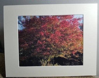 My Favorite Tree (Matted Print)