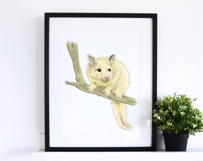 The Golden Possum // White Collection