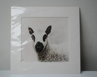 Kerry Hill Lamb mounted limited edition giclee print