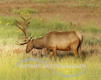 Stock Photography Elk in the Meadow  Printable Digital Download Large Fine Art  Wall Art Animals Wildlife Mammals Instant Art