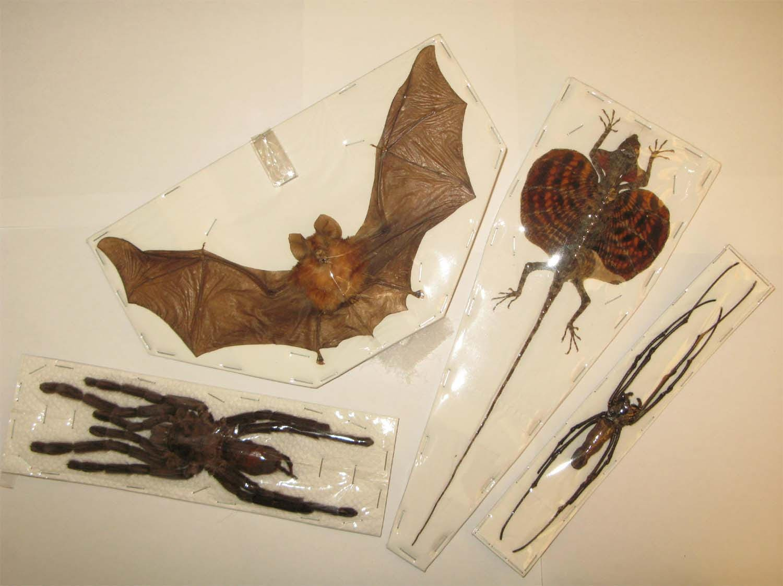Halloween Set Real Bat Flying Dragon Birds Eating