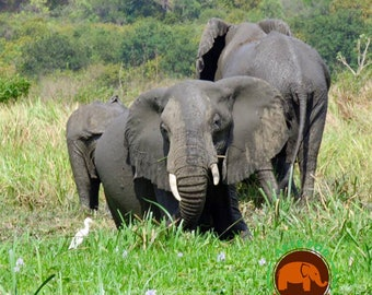 Elephant Photography Card- Fine Art