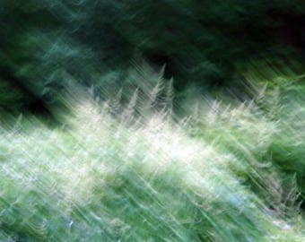 Abstract photography. Fine art photography. Nature photo. Vegetation.