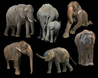 6 Elephant Overlays